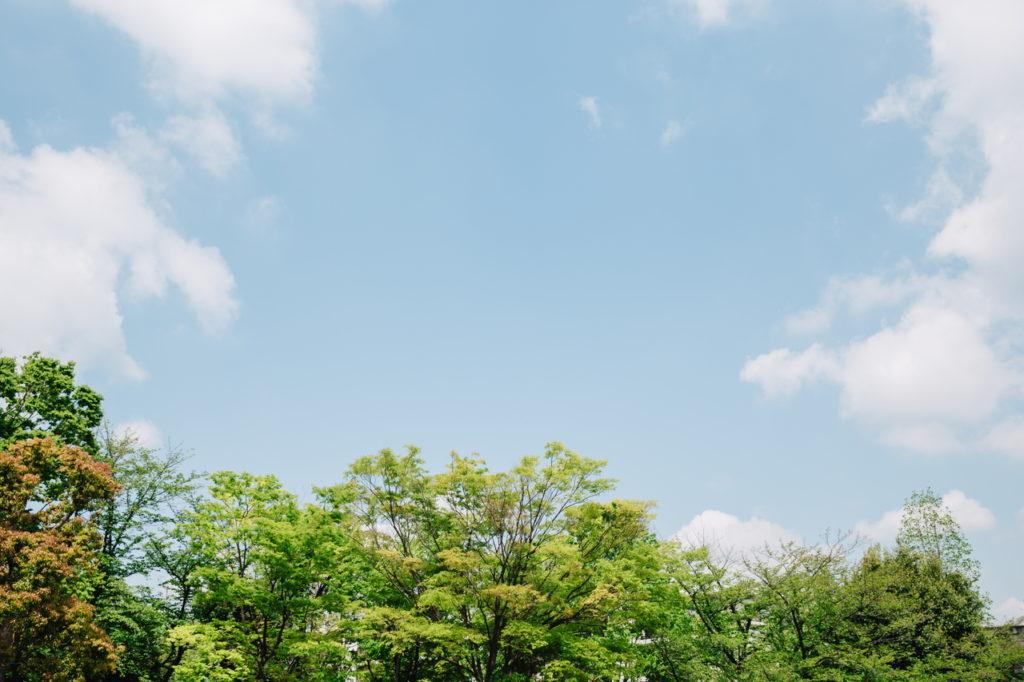 テラス席から見上げる青空